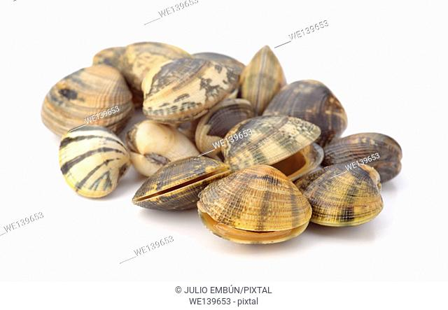 clams isolated on white background