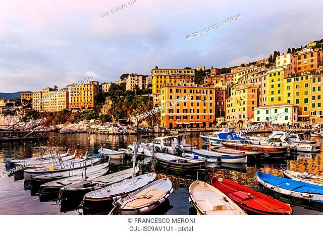 Fishing boats moored in harbour, Camogli, Liguria, Italy