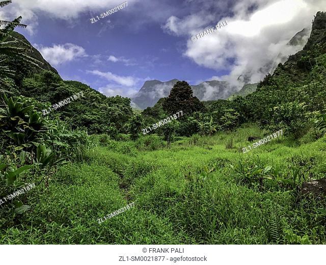 Rainforest and steep mountains, Iao Valley State Park, Maui, Hawaii