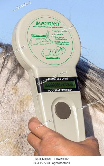 RFID scanner used to read the information of an animal microchip implantate. Egypt