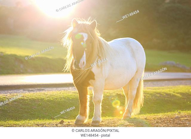 Horse on pasture evening near sunset