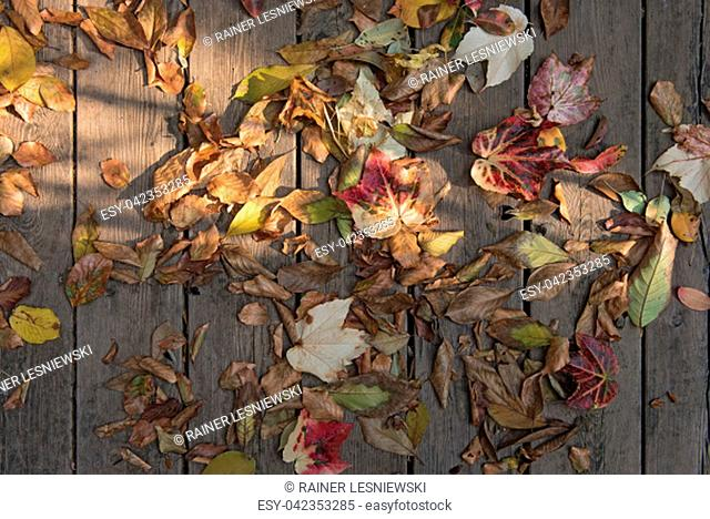 colorful autumn leaves on brown wooden planks