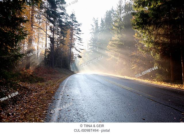 Landscape with rural forest road in rays of misty autumn sun, Lohja, Southern Finland, Finland