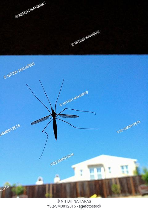 Mosquito Alert - a mosquito on the window in a house