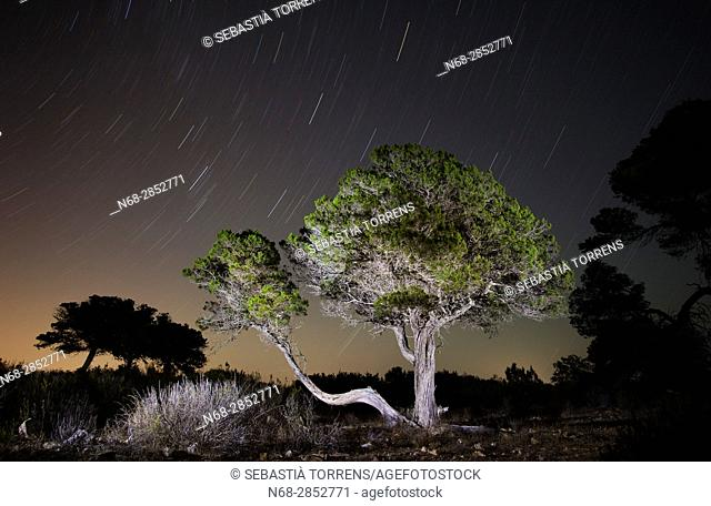 Tree (Juniperus phoenicea) at night, Formentera, Balearic Islands, Spain