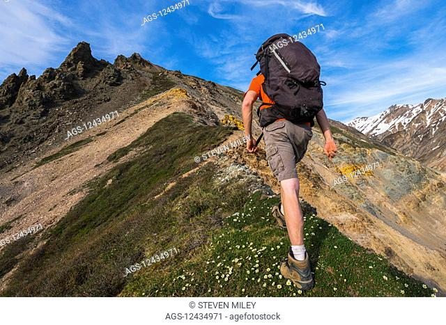 A backpacker climbs a steep ridge in the eastern Alaska Range near Whistler Creek; Alaska, United States of America
