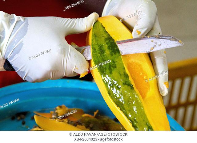 Kenya, Meru, Meru Herbs, preparation of jam, peeling papaya