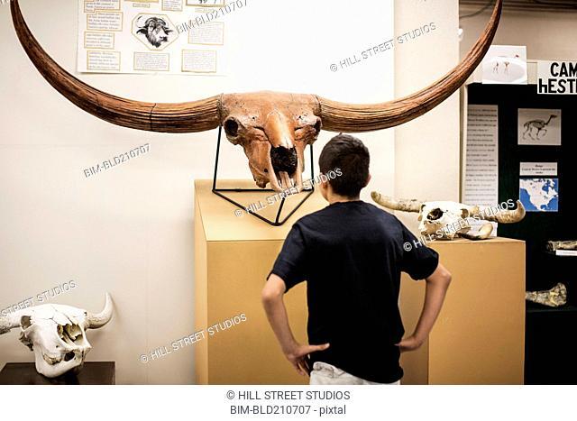 Hispanic boy examining horns in museum