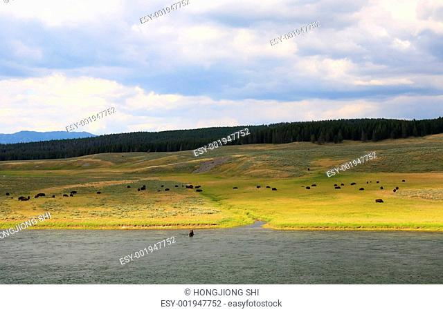The scenery along the Yellowstone River