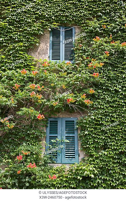 europe, italy, tuscany, sticciano, house with ivy