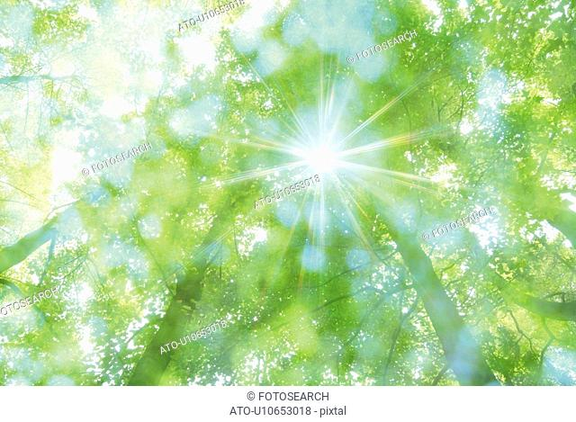 Sunshine in greens, low angle view, lens flare, soft focus