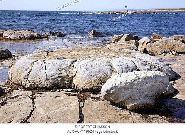 Giant bun-shaped, fossilized organism that thrived in a tidal zone near Flower's Cove, Newfoundland some 650 million years ago