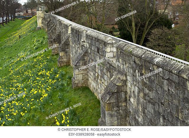 Spring flowers alongside the historic city walls of York, UK