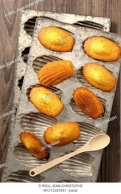 Homemade Madeleines