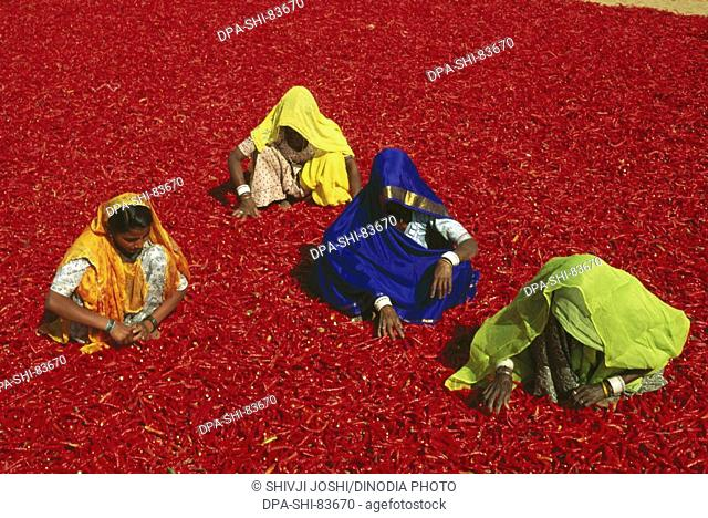 spices , red chilies , jodhpur , rajasthan , india