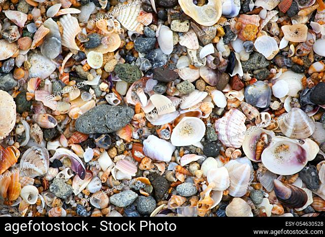 Photo of sea shells background