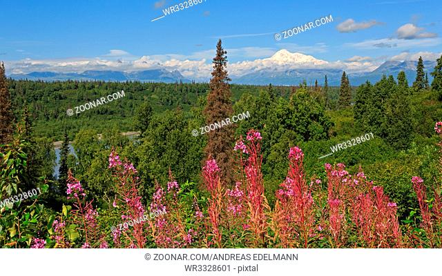 Panorama des Denali-Massivs in Alaska