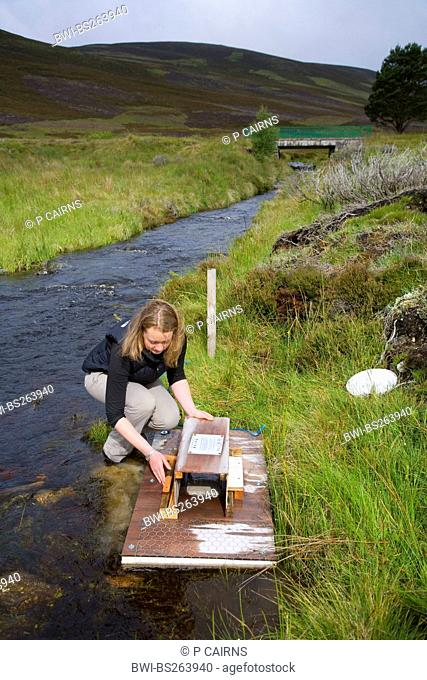 European water vole, northern water vole Arvicola terrestris, setting up a mink raft as part of Cairngorms water vole conservation project, United Kingdom