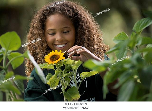 A girl examining a sunflower plant with flowers