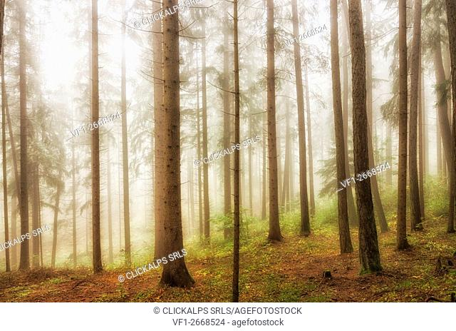 italy, trentino Alto Adige, Non valley, fog in forest