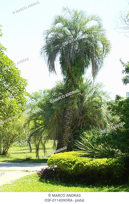 natural green wood trees in a bothanical park