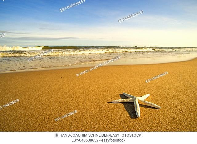 Sea star on a beach with surf in Poland