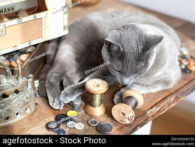 Katze auf Tisch