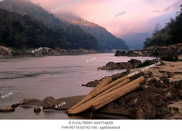 Forest destruction, Illegally cut teak ready for rafting down Salaween River, Northwest Thailand