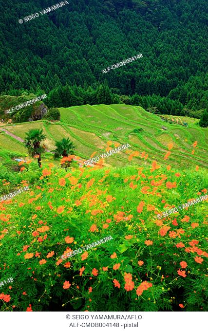Flowers, trees and terraced rice fields in Kumano, Mie Prefecture