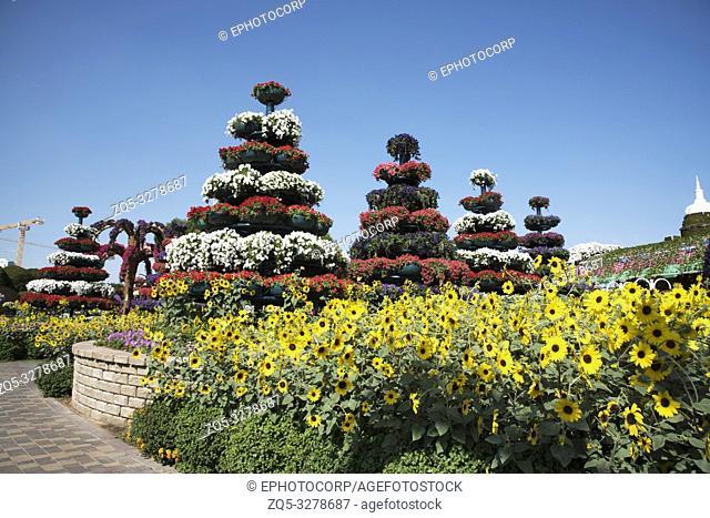 Landscape of flowers and plants, Dubai Miracle Garden a flower garden, Dubailand, Dubai, United Arab Emirates