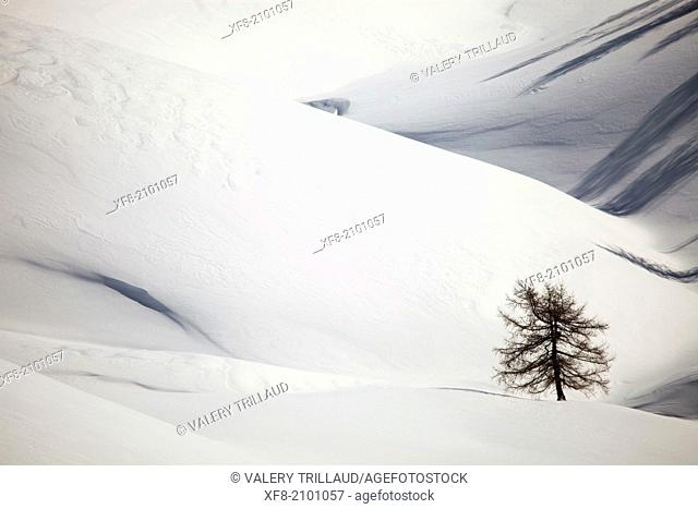 Trees in the snow, Alpes-Maritimes, Provence-Alpes-Côte d'Azur, France