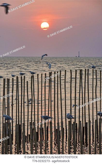 Egrets, seagulls, and terns at sunset at the Bang Pu bird sanctuary, Bangkok, Thailand