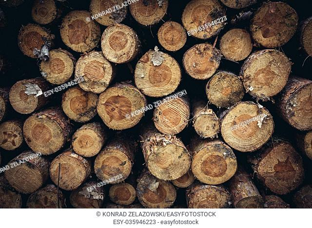 Heap of logs in Kampinos Forest, large forest complex located in Masovian Voivodeship, west of Warsaw in Poland