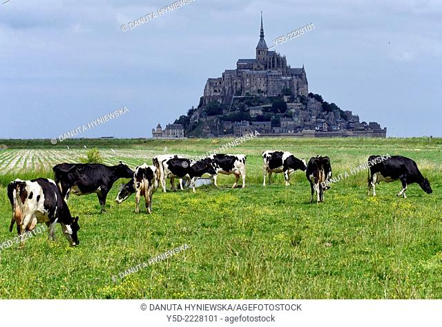 rural landscape of Normandy, Mont Saint-Michel in the background, France