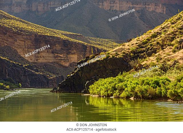Grand Canyon cliff and riparian vegetation reflections in the Colorado River, Grand Canyon National Park, Arizona, USA