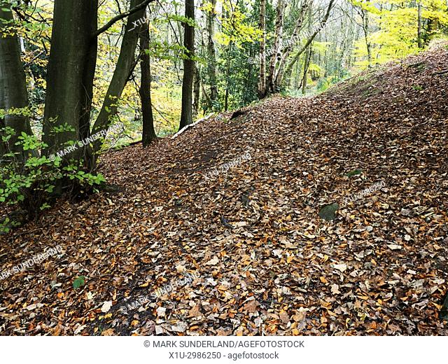 Carpet of Fallen Autumn Leaves in Goitsock Wood Cullingworth West Yorkshire England