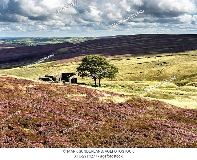 Top Withins on Haworth Moor in Summer near Haworth West Yorkshire England