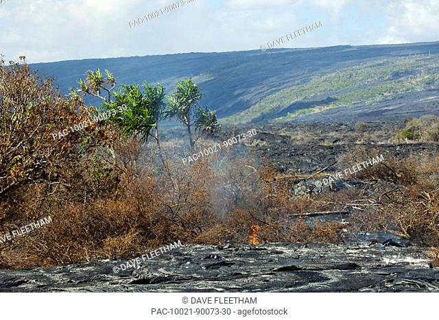 Hawaii, Big Island, Kalapana, A new Pahoehoe lava flow from Kilauea burning forest isolated by an older Pahoehoe flow