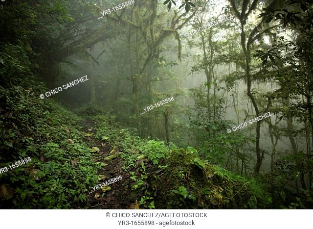 A foot path crosses the cloud forest in El Triunfo Biosphere Reserve in the Sierra Madre mountains, Chiapas state, Mexico
