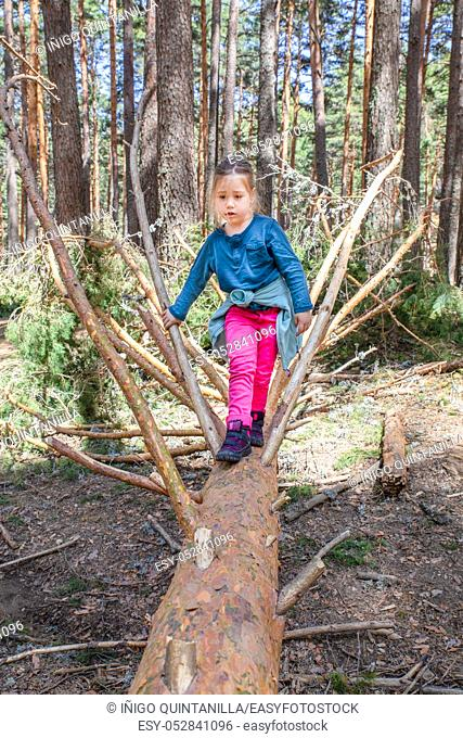 four years old girl with pink trousers and blue shirt walking on fallen tree trunk in forest of Guadarrama Natural Park (Navafria, Segovia, Spain)
