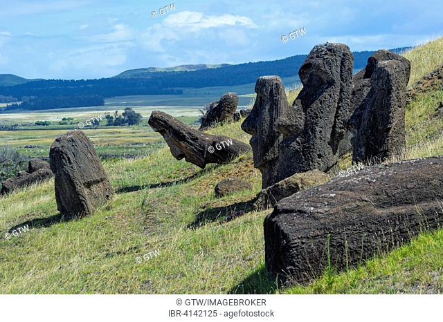Moais in Rano Raraku, Unesco World Heritage, Rapa Nui National Park, Easter Island, Chile