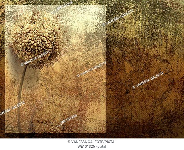 Old wall With dried flower and wall texture
