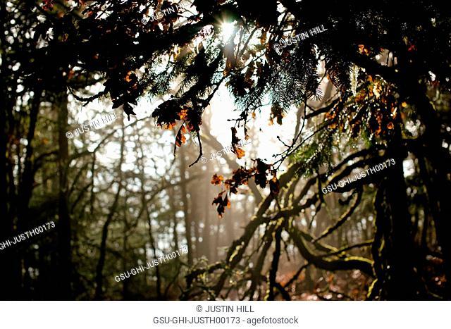 Forest Scene During Evening Light