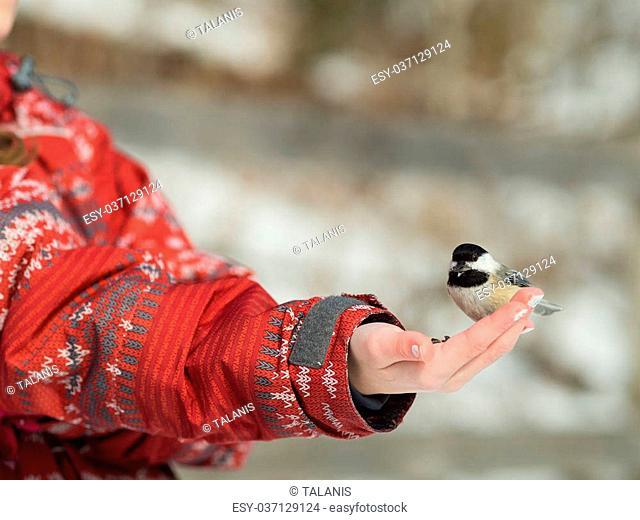 Girl feeding a Black-caped chickadee with seeds