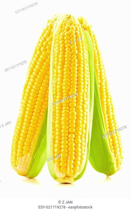Ears of corn isolated on a white background
