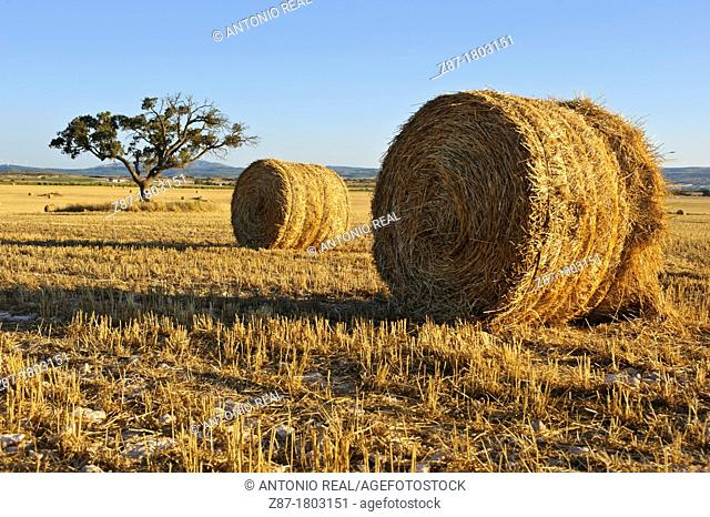 Straw Bales and cereal field, Almansa Albacete