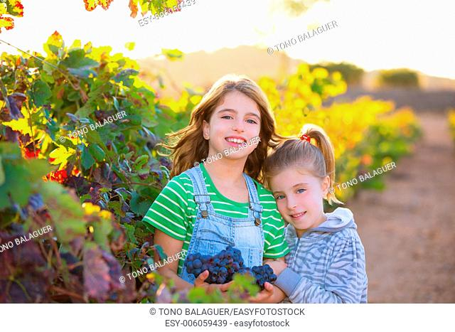sister kid girs farmer hug in vineyard harvest in mediterranean autumn field at sunset