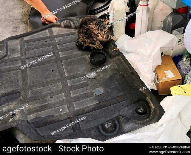 31 July 2020, Berlin: A cat sits on an engine part in a garage. An unusual find was made by mechanics in a car workshop in Berlin-Charlottenburg