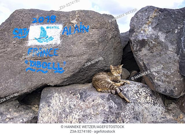 Stray cat and sailing contest paiting on a rock at the coastline in Las Palmas de Gran Canaria, Canary Islands