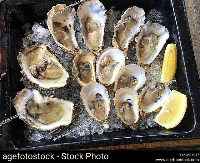 Variety of Oysters on the Half Shell, Oslo, Norway